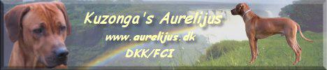 Kuzonga´s Aurelijus